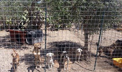 cani-randagi-cattività-canile-trasferta-adozione
