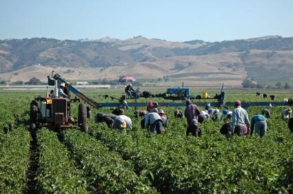 immigrazione e agricoltura