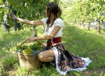 vendemmia-in-agriturismo-sicilia-marsala-marsalanews-uva-vino-attrazione-spettacolo