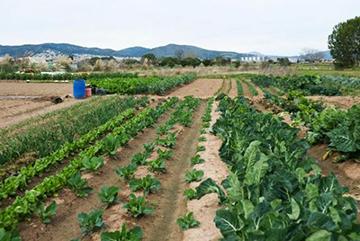 terreno-agriciolo-coltivazione-campo-imu-agricola