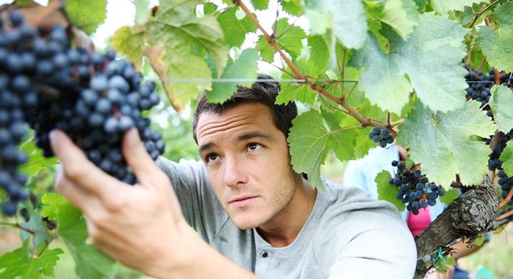 sicilia-wine-vino-giovani-giovane-agricoltore-agricoltori-vite-vendemmia-uva-vigneto