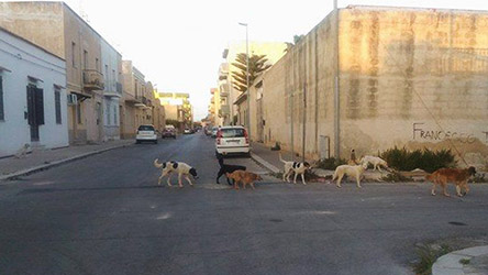 Cane impiccato a Campobello di Mazara, ricompensa per chi trova i colpevoli