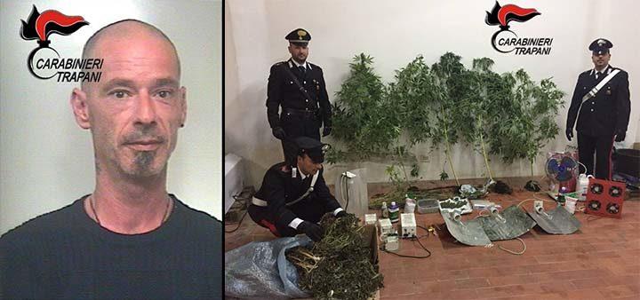 Sequestrata una piantagione di cannabis dai Carabinieri