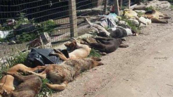 E' strage di cani a Sciacca nell'agrigentino: almeno 30 trovati morti avvelenati