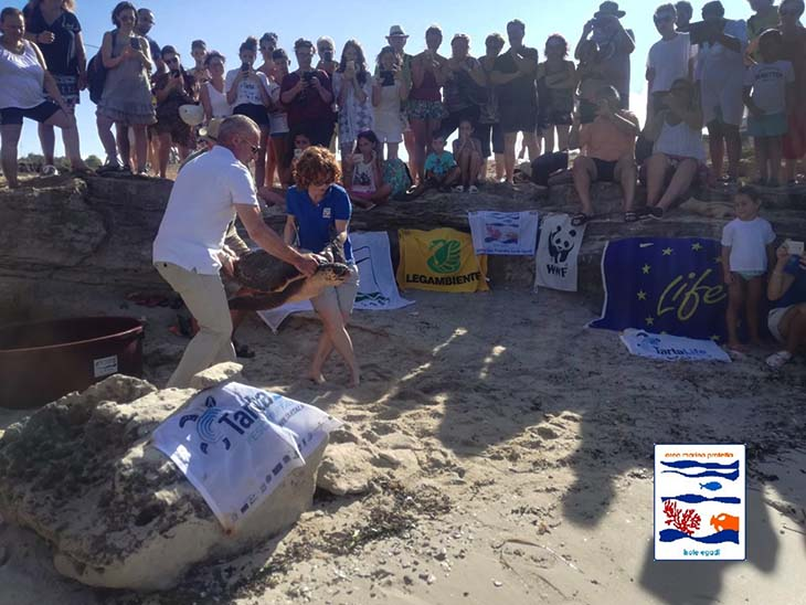 Rilasciate in mare due tartarughe marine in cura al centro di primo soccorso