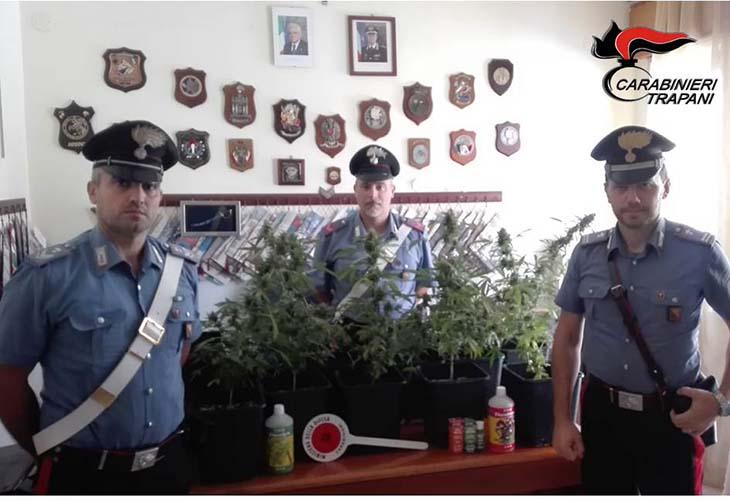 Scovata una piantagione di marijuana a Castellammare, un arresto