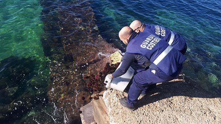 Marsala: pesca e commercializzazione abusiva di ricci di mare, due denunce